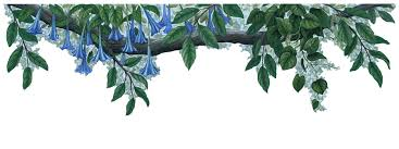 Vine Wall Decals Wall Border Decals Plant Wall Decals