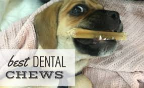 best dental chews for dogs to give your