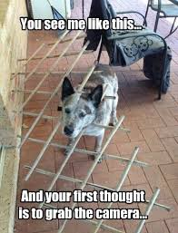 Dog With Head Stuck In Fence Justpost Virtually Entertaining