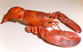 Lobster mail order should be banned ...