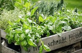 gardening checklist for washington d c