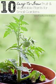 vegetable plants for small gardens
