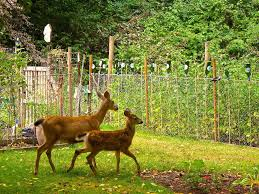 Easy Tips To Keep Wildlife Our Of Your Yard And Garden Calgary Herald