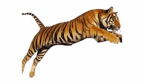 tiger png transpa images tiger