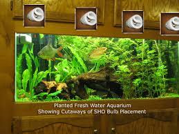 freshwater aquarium plant care