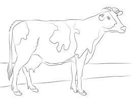 Holstein Koe Kleurplaat Gratis Kleurplaten Printen