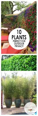 Outdoor Privacy Plants Landscaping Outdoor Living Beesandrosesblog Outdoor Gardens Privacy Landscaping Outdoor Privacy