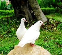 صور طيور اجمل صور للطيور المميز