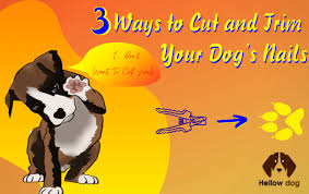 3 ways to cut and trim your dog s nails