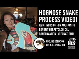 Hognose Snake Process Video - YouTube