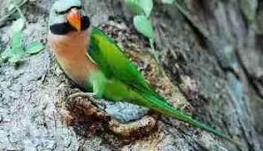 Angka Jitu Mimpi Menangkap Anak Burung Cucak Ijo Kotakbet Terbaru