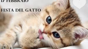 17 febbraio, giornata dei gatti - Quotidianpost