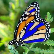 Image result for pics butterflies