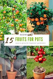 15 container gardening fruit with