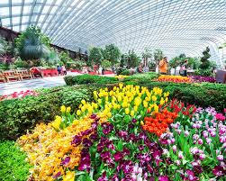 flower dome cloud forest