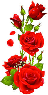 red rose flower free png transpa