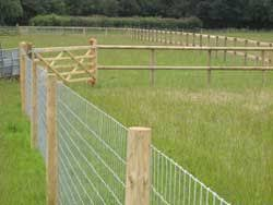 Reasonably Priced Dog Proof Fencing Suggestions Dog Proof Fence Backyard Fences Dog Fence