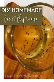the best homemade fruit fly trap