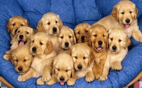 free puppy lite live wallpaper