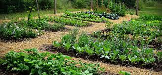 5 tips for planning your vegetable garden