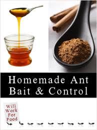 homemade ant s recipes tips