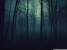 dark forest 4k ultra hd wallpapers