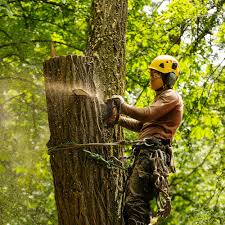 Tree Services | Cleveland, TN