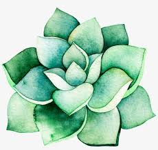 Watercolor Stereo Succulent Cartoon Transparent - Succulent Plant  Transparent PNG - 1024x926 - Free Download on NicePNG