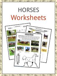 horse facts and worksheets for kids