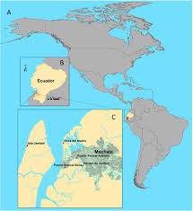 Spatial and seasonal dynamics of cholera (Vibrio cholerae) in an estuary in  southern coastal Ecuador | bioRxiv