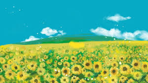 sunflower background photos and