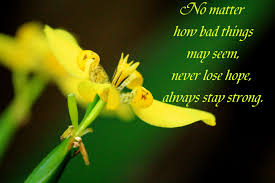 stay strong message stay strong message quotes flower image