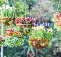 The Beautiful World Created By Hanging Planters Ron Alicia Robinson Florist