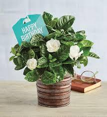 happy birthday gardenia harry david