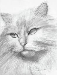 Himalayan Cat Dieren Tekenen Dieren Kleurplaten