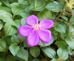 10 native plants to grow in your perth