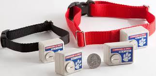 Electric Dog Training Collars Nz Proven Dog Training