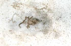 pictures of subterranean termite damages