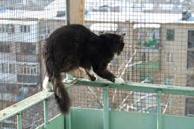 How To Cat Proof Your Balcony Catios Enclosures And More Oliveknows