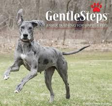 The Gentlesteps Low Stress Dog Fence Training Method