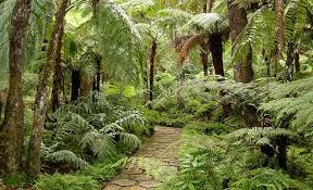 fernery gorgeous gardens shade