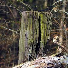 Old Post Fence Free Photo On Pixabay