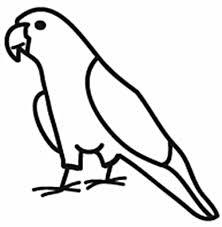 Conure Window Decal Varietees Bird Store