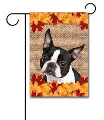 fall leaves boston terrier garden