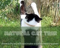 want a cat scratching post if