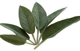 Salvia: coltivazione, potatura e usi della pianta - Cure-Naturali.it