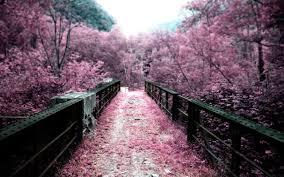 pink landscape wallpapers hd desktop