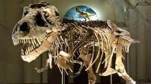 Identifican el esqueleto de dinosaurio opalizado más completo del ...
