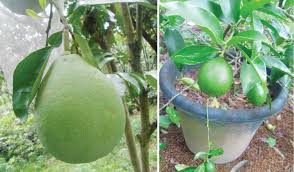 fruit trees you d love to grow in