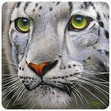 Snow Leopard Face 3 Pack Of Vinyl Decal Stickers 5 For Laptop Car Walmart Com Walmart Com